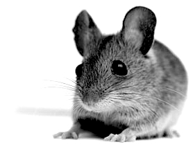bw_mouse