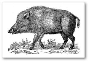 boar_shadow